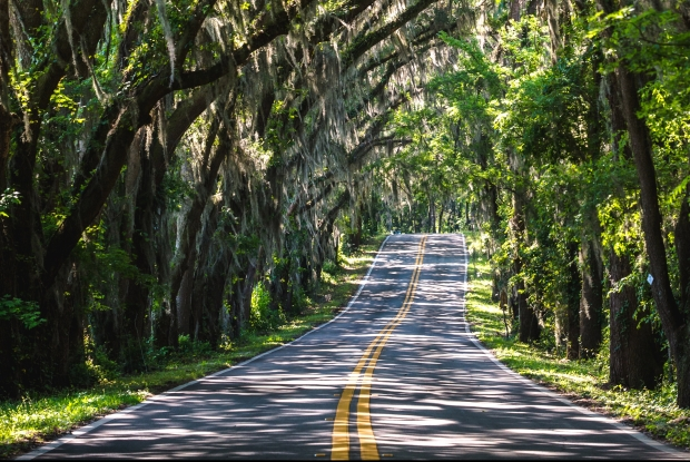 trees-arching-over-the-road-in-tallahassee-florida.jpg